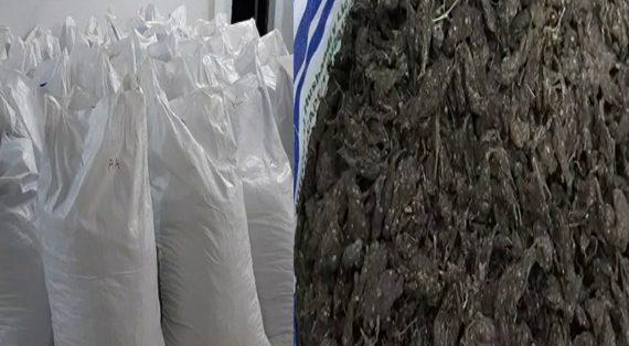Two held with ganja worth Rs 5.7 lakh in Mumbai