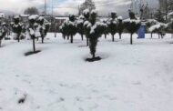 Mercury settles several degrees below freezing point in Kashmir
